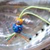 Lillipuce opale MimiPinson