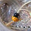 Lillipuce opale orangeade