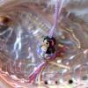 Lillipuce opale tourniquet